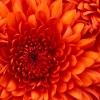 Pollen frais : coup de boost à l'automne